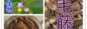 白毛藤粉 纯天然浓缩 全水溶 厂家生产