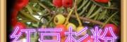 红豆杉粉 纯天然浓缩 全水溶 厂家生产
