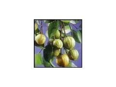 藤黄果提取物