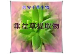 垂盆草提取物垂盆草粉