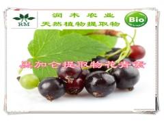 植物提取物花青素系列-黑加仑提取物  4:1
