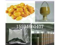 沙棘果粉 厂家供应