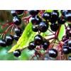 Elderberry Extract Powder