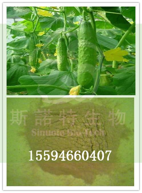 黄瓜粉厂家直供斯诺特生物