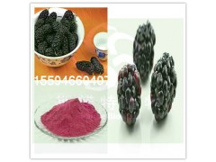 黑莓粉水果粉厂家直供斯诺特生物