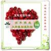 植物提取物厂家供应-蔓越莓提取物原花青素 20%
