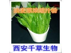 油麦菜提取物水溶粉