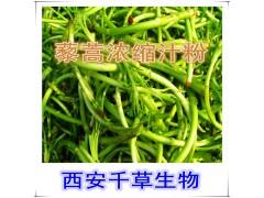 藜蒿提取物水溶粉
