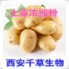 土豆提取物水溶粉