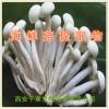 海鲜菇提取物水溶粉