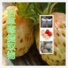 白草莓提取物水溶粉