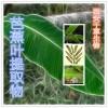 芭蕉叶提取物水溶粉