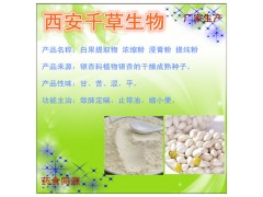 白果仁提取物原粉