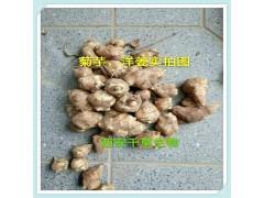 菊芋提取物天然全水溶厂家生产菊芋粉