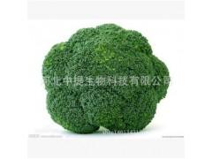 西兰花提取物 萝卜硫素 10:1 纯天然提现货包邮 保健原料【中提】