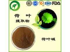 荷叶提取物,荷叶碱,厂家直供纯天然植物提取物,比例提取物,果蔬粉