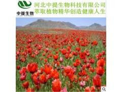 供红花提取物 红花 规格10:1 红花提取物 包邮厂家直供【中提】