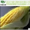 供玉米须提取物 玉米须 规格10:1 现货包邮 保健品原料【中提】