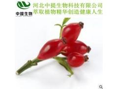 玫瑰果提取物 专业植提厂家 纯天然植物提取 现货包邮【中提】