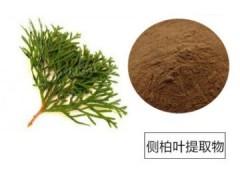 侧柏叶提取物10:1优质 侧柏叶粉加工提取物 厂家品质保证