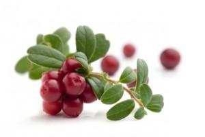 欧盟:蔓越莓提取物粉末作为食品成分是安全的