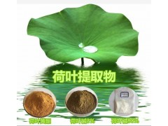 荷叶提取物 荷叶碱98% 西安锐博自主研发生产