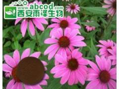 紫锥菊提取物