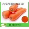 胡萝卜提取物Carrot extract β-胡萝卜素提高免疫力