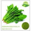 优质菠菜粉 菠菜速溶粉 80-100目 100%水溶菠菜粉
