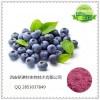 蓝莓酵素粉 纯天然蓝莓酵素 可定制各种水果酵素粉