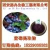 蓝莓提取物 10:1 越橘提取物 保护视力