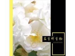 白残花 蔷薇花 量大从优 现货包邮