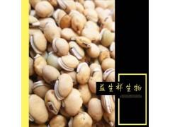 白扁豆提取物/扁豆粉/白扁豆速溶粉