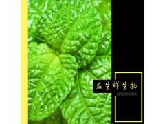 薄荷提取物 薄荷粉 厂家供应 优质薄荷叶提取物
