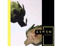 朝鲜蓟提取物30:1厂家直销朝鲜蓟粉1kg起订现货包邮朝鲜蓟提取物
