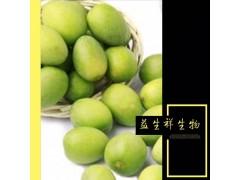 厂家直销橄榄叶提取物规格20:1 优质橄榄叶粉1kg包邮