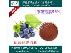 葡萄籽提取物 原花青素95% 慈缘现货热销