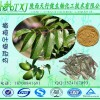 橄榄苦甙60% 橄榄苦苷 橄榄叶提取物 规格可定制 HPLC检测含量保证 欢迎询价