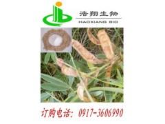 牧马豆天然提取 披针叶黄华 又叫金雀花碱