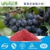 黑果花楸果汁粉 野樱莓果粉/黑果腺肋花楸果粉 不老莓果汁粉 全水溶食品级 品质保证 1KG起订
