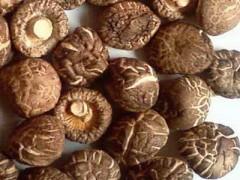 香菇多糖 香菇提取物 厂家现货包邮