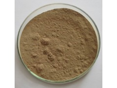 侧柏叶提取物10:1 植物浓缩粉 100g/袋现货量大优惠