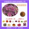 紫苏提取物  随时发货 原厂直销 优质原料