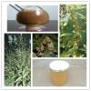 淡竹叶提取物 多种规格 昌岳生物包邮