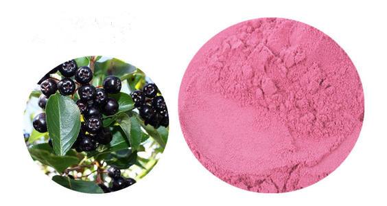 马奇果提取物 马基莓速溶粉 原粉 马奇果浓缩汁1公斤起订