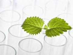 我国植物提取物产业市场潜力巨大,成为国内外企业必争之地