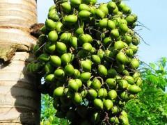 浅谈三地槟榔文化
