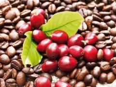 被遗弃的超级水果抗氧化剂——咖啡樱桃提取物