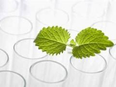 植物提取物出口市场活跃 提取设备激发高质量