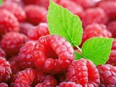 水果树莓可抑制肝癌细胞生长